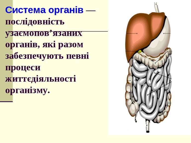 Система органів — послідовність узаємопов'язаних органів, які разом забезпечу...