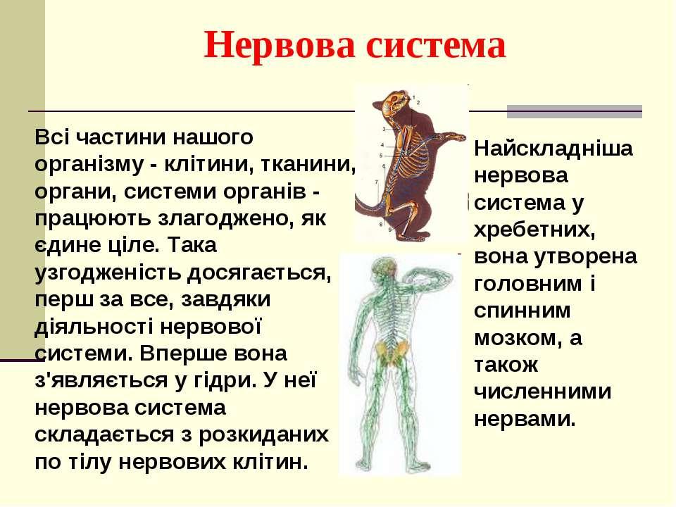 Всі частини нашого організму - клітини, тканини, органи, системи органів - пр...