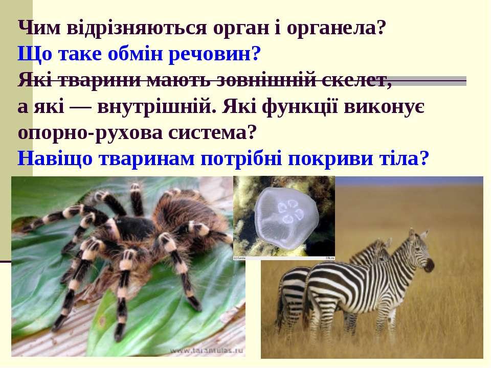 Чим відрізняються орган і органела? Що таке обмін речовин? Які тварини мають ...