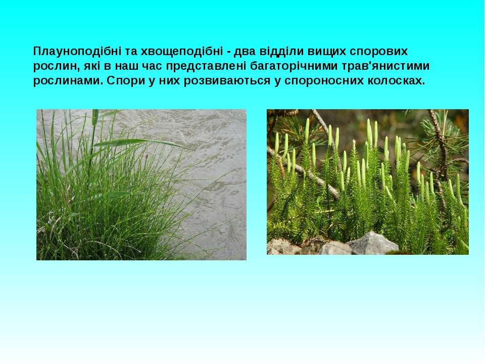 Плауноподібні та хвощеподібні - два відділи вищих спорових рослин, які в наш ...