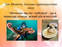 """Тип Молюски. Загальна характеристика типу """" Молюски» від лат. «mjlluskus"""" , щ..."""