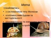 Мета Ознайомитись: з систематикою типу Молюски особливостями будови та життєд...