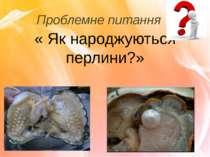 Проблемне питання « Як народжуються перлини?»