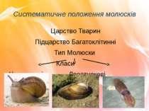 Систематичне положення молюсків Царство Тварин Підцарство Багатоклітинні Тип ...