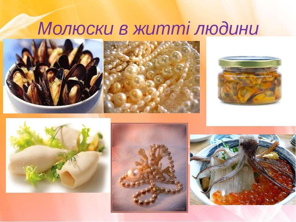 Молюски в житті людини