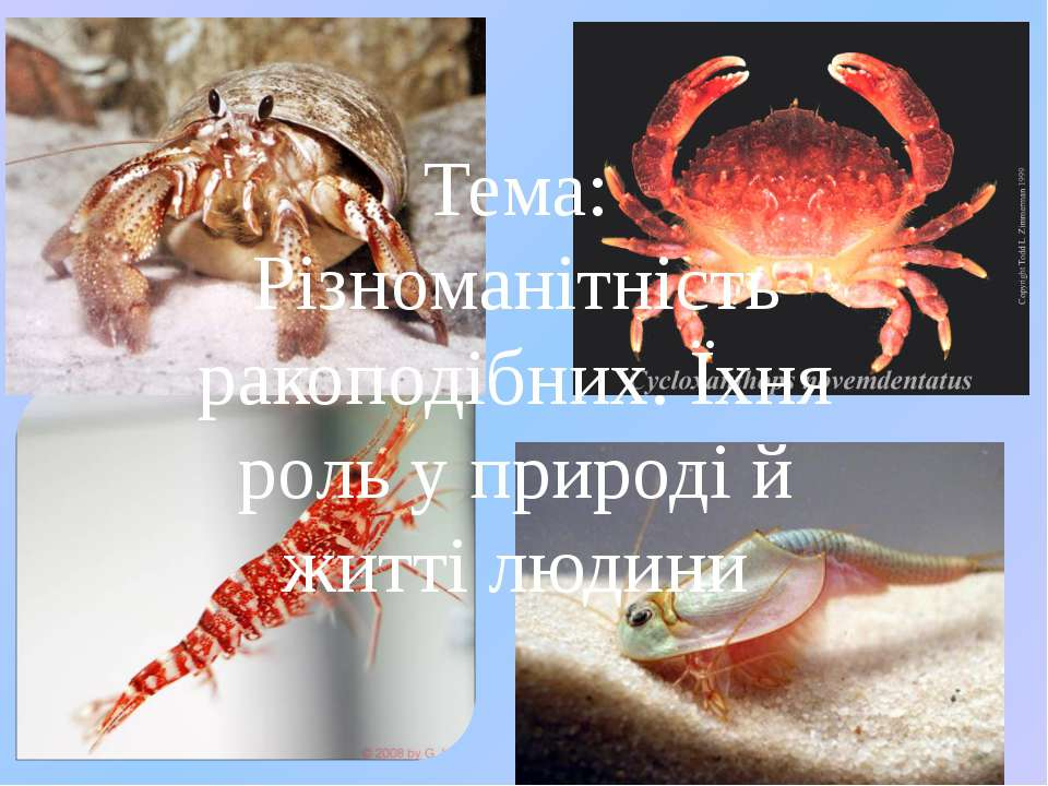 Тема: Різноманітність ракоподібних. Їхня роль у природі й житті людини