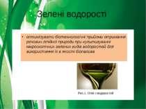 Зелені водорості