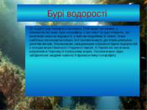 Бурі водорості До відділу Бурі водорості належать 1500 видів організмів, у хл...
