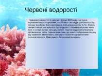 Червоні водорості Червоних водоростей в природі є понад 4000 видів. Це також ...