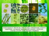 Зелені водорослі. Верхній ряд, зліва на право: хламідомонада, хлорелла, мікра...