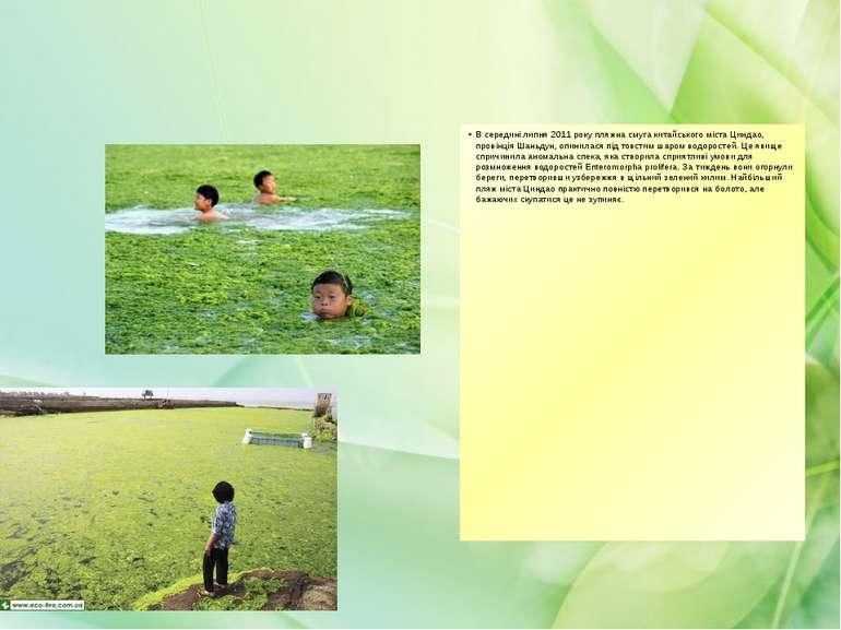 В середині липня 2011 року пляжна смуга китайського міста Циндао, провінція Ш...