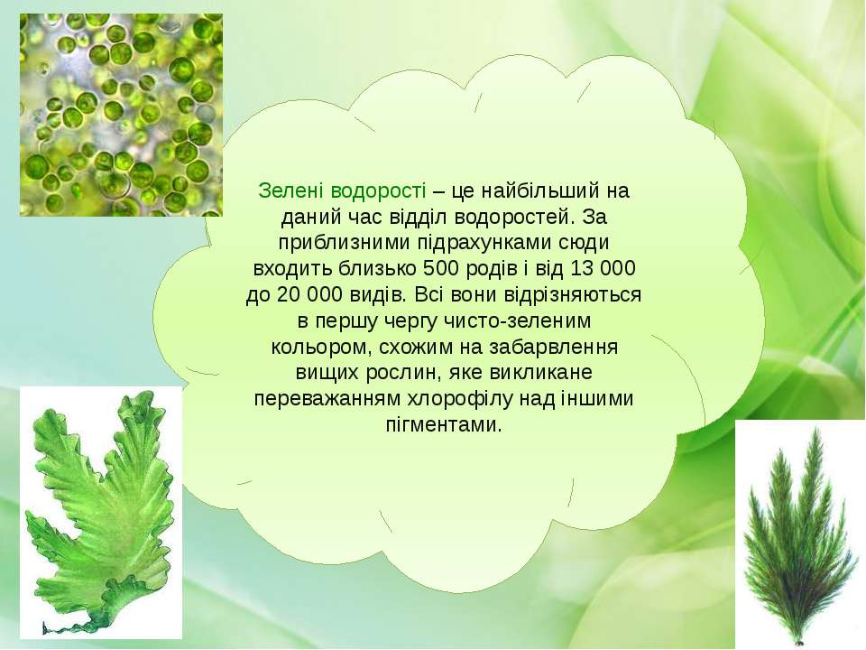 Зелені водорості – це найбільший на даний час відділ водоростей. За приблизни...