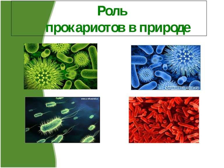 Роль прокариотов в природе Редя О., Селянина К., Учащиеся 10 кл. ООШ№6, г.Руб...