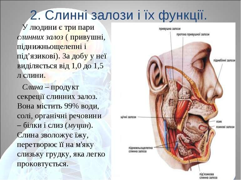 2. Слинні залози і їх функції. У людини є три пари слинних залоз ( привушні, ...