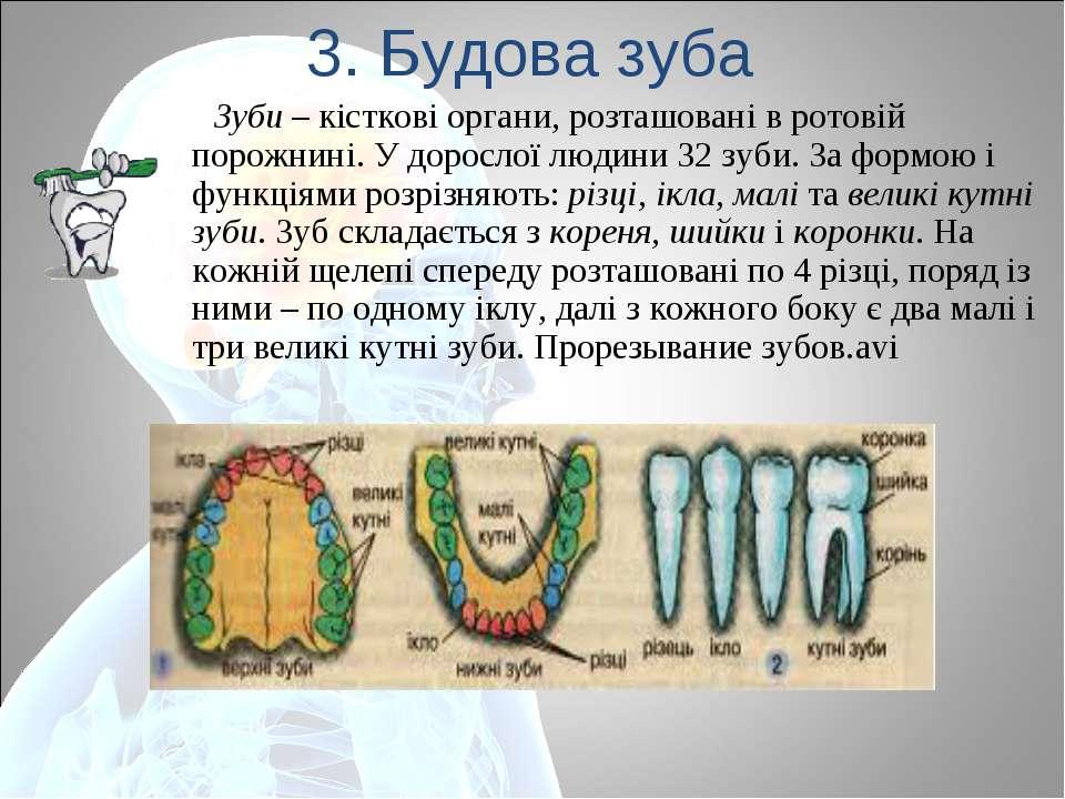 3. Будова зуба Зуби – кісткові органи, розташовані в ротовій порожнині. У дор...