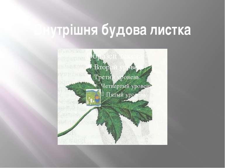 Внутрішня будова листка