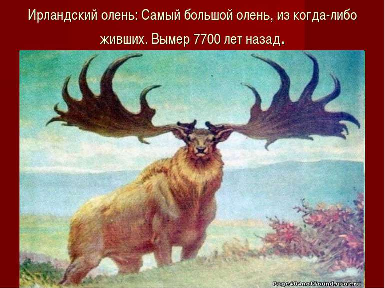 Ирландский олень: Самый большой олень, из когда-либо живших. Вымер 7700 лет н...