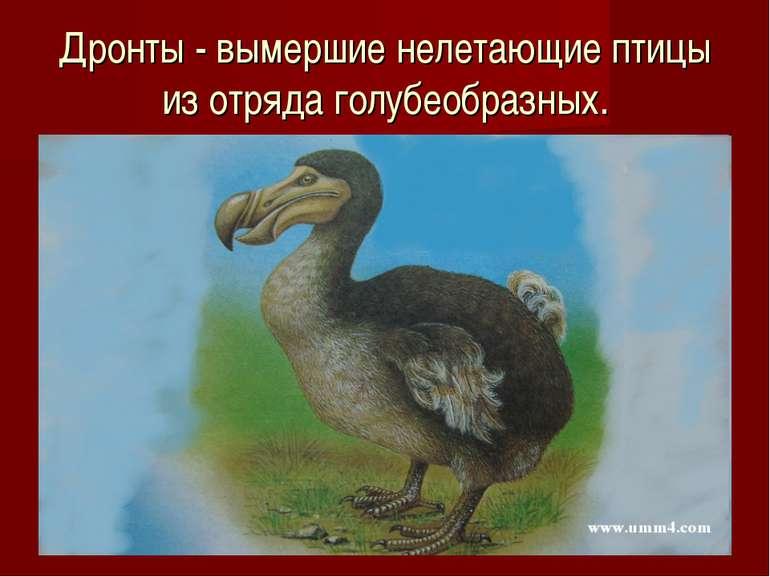 Дронты - вымершие нелетающие птицы из отряда голубеобразных.