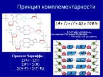 Принцип комплементарности Правило Чаргаффа: ∑(А) = ∑(Т) ∑(Г) = ∑(Ц) ∑(А+Г) = ...