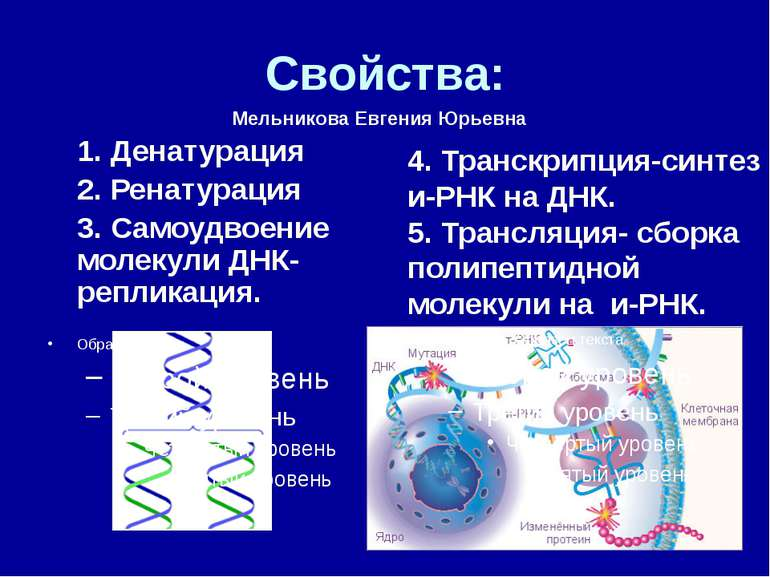 Свойства: 1. Денатурация 2. Ренатурация 3. Самоудвоение молекули ДНК- реплика...