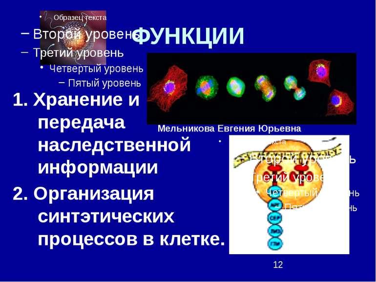 ФУНКЦИИ 1. Хранение и передача наследственной информации 2. Организация синтэ...
