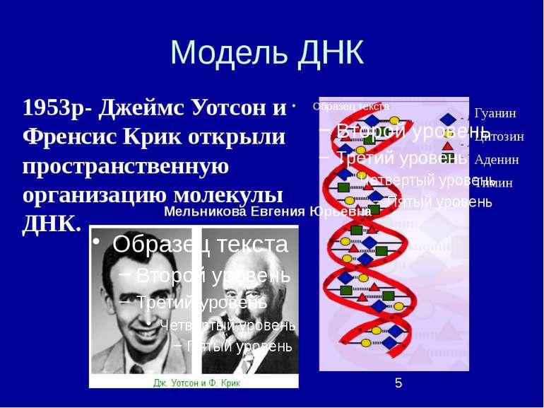 Модель ДНК Гуанин Цитозин Аденин Тимин 1953р- Джеймс Уотсон и Френсис Крик от...