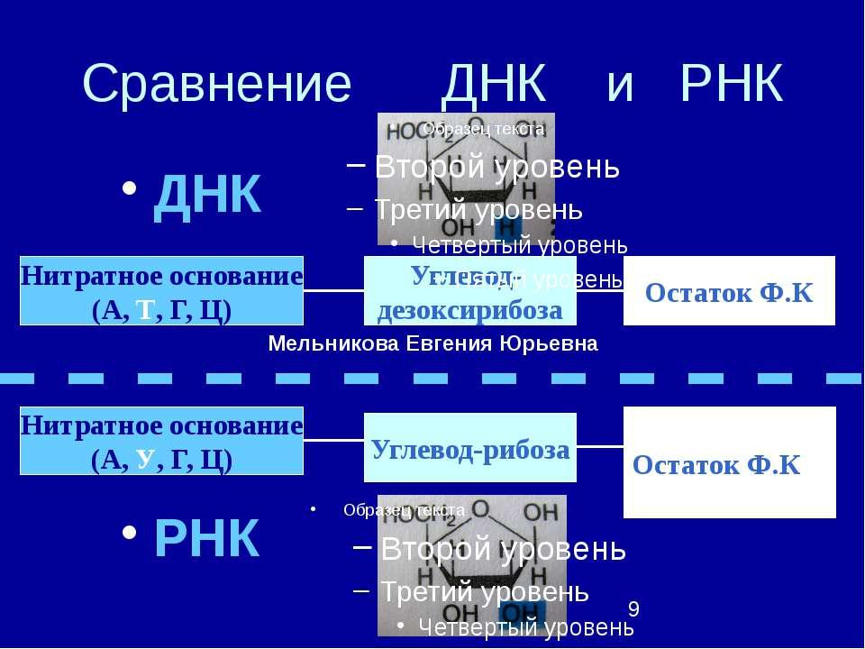 Сравнение ДНК и РНК ДНК РНК Нитратное основание (А, У, Г, Ц) Углевод- дезокси...