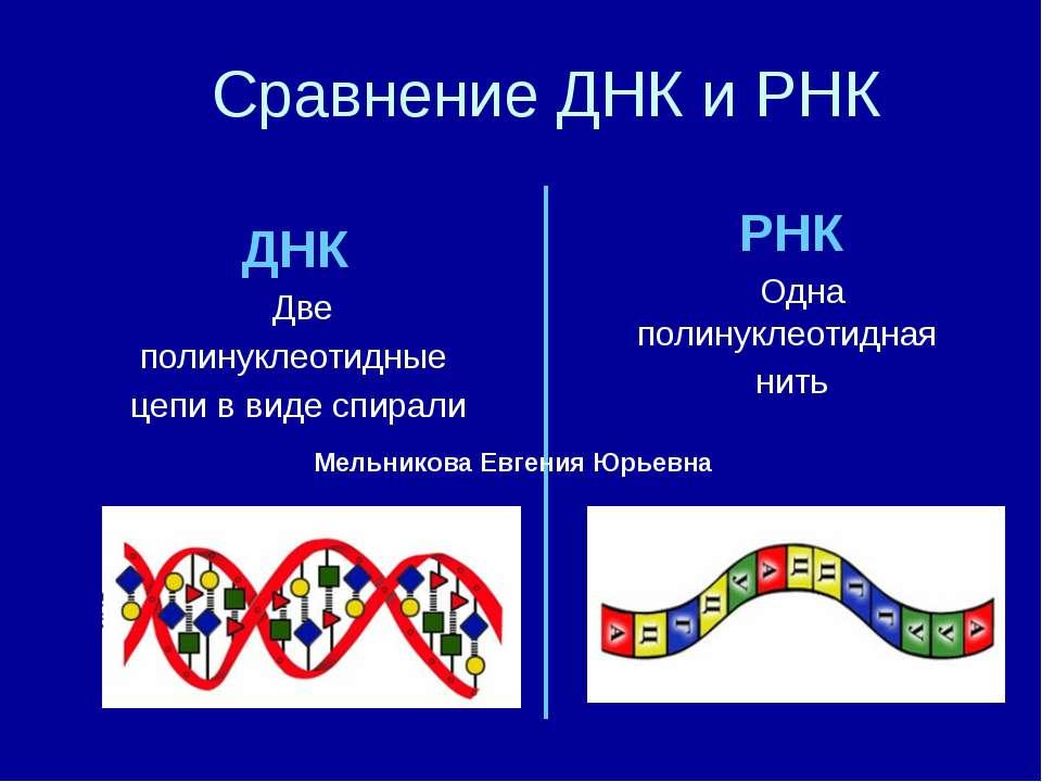 Сравнение ДНК и РНК ДНК Две полинуклеотидные цепи в виде спирали РНК Одна пол...