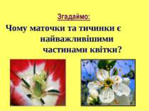 Чому маточки та тичинки є найважливішими частинами квітки? Згадаймо: