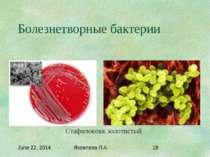 Болезнетворные бактерии Стафилококк золотистый Яковлева Л.А.