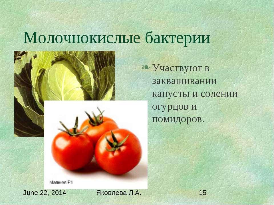 Молочнокислые бактерии Участвуют в заквашивании капусты и солении огурцов и п...