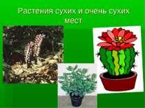 Растения сухих и очень сухих мест