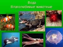 Вода Влаголюбивые животные
