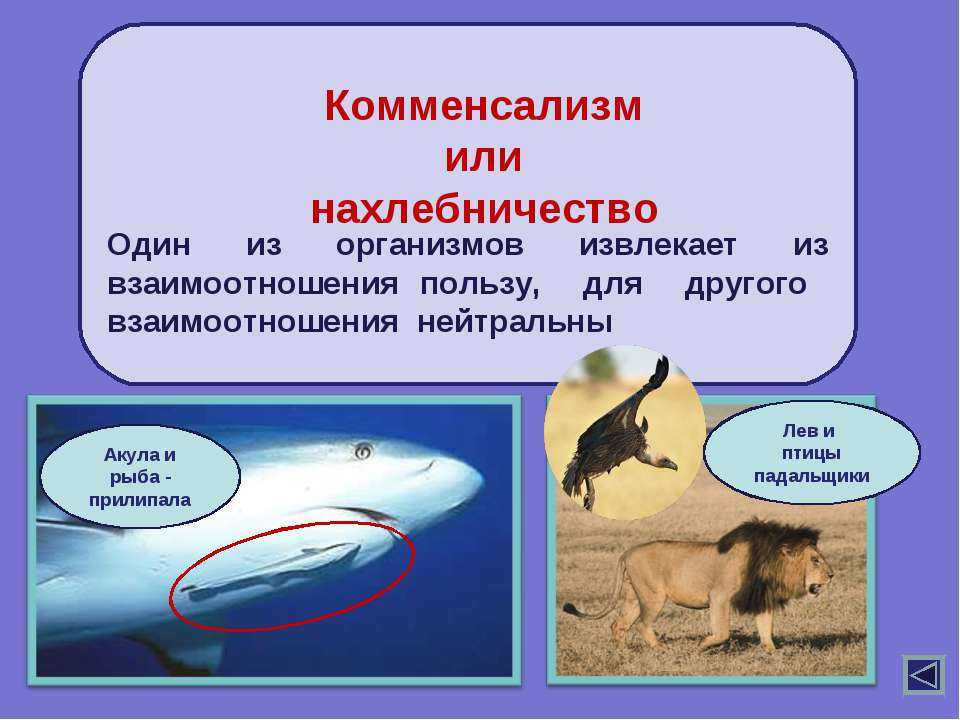 Один из организмов извлекает из взаимоотношения пользу, для другого взаимоотн...
