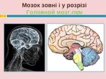 Мозок зовні і у розрізі Головной мозг.mov *