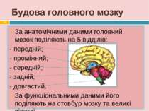 Будова головного мозку *