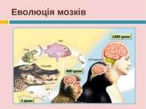 Еволюція мозків *