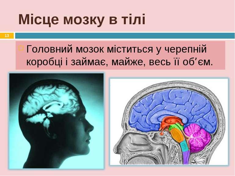 Місце мозку в тілі Головний мозок міститься у черепній коробці і займає, майж...