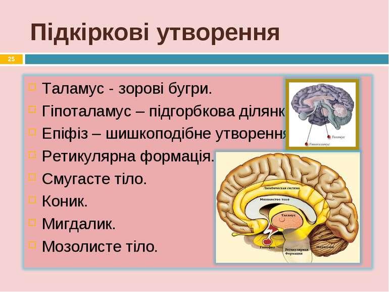 Підкіркові утворення *