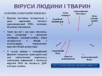 ВІРУСИ ЛЮДИНИ І ТВАРИН ОСНОВНІ ХАРАКТЕРИСТИКИ ВІЛ Вірусна частинка складаєтьс...