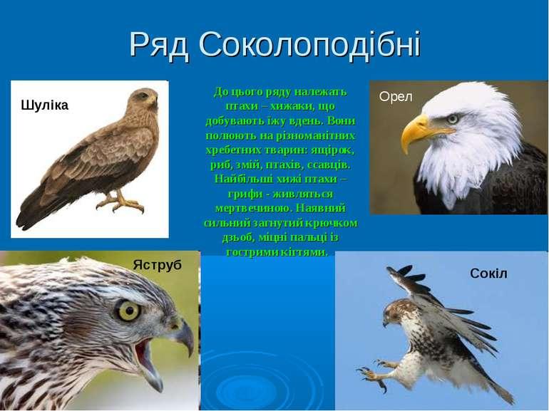 Ряд Соколоподібні До цього ряду належать птахи – хижаки, що добувають їжу вде...