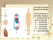 Способи регуляції функцій організму. Рівні організації в організмі людини: 1 ...