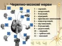 1 — зоровий; 2 — окоруховий; 3 — блоковий; 4 — відвідний; 5 — присінково-зави...