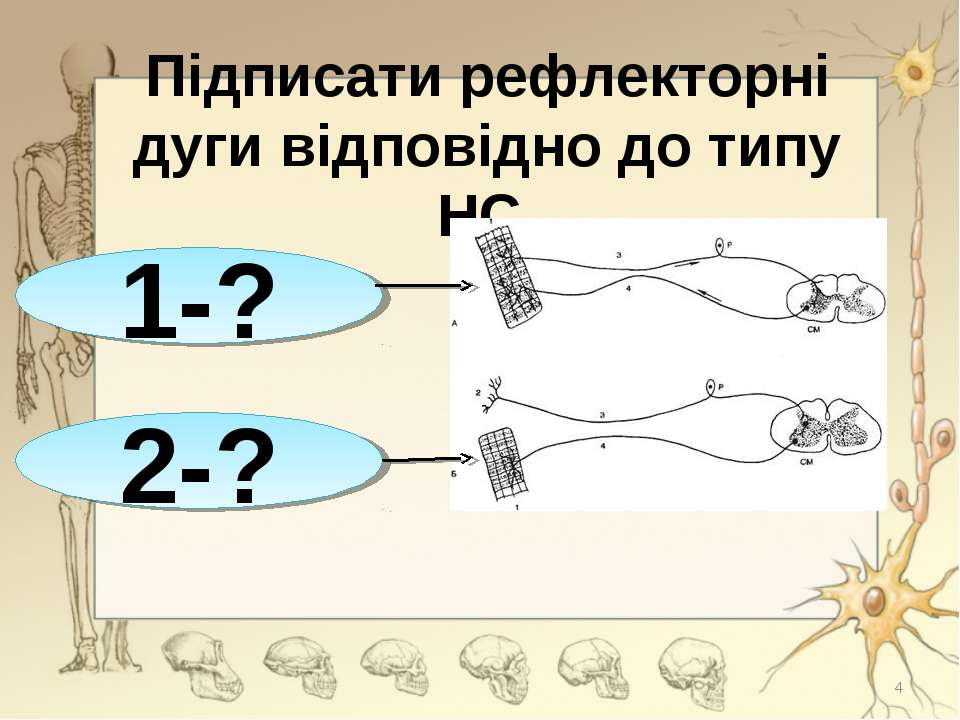 Підписати рефлекторні дуги відповідно до типу НС 1-? 2-? *