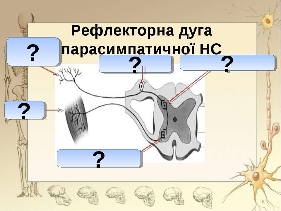 Рефлекторна дуга парасимпатичної НС ? ? ? ? ? *
