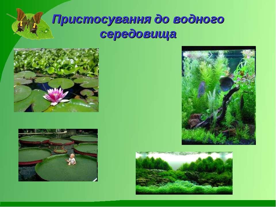 Пристосування до водного середовища