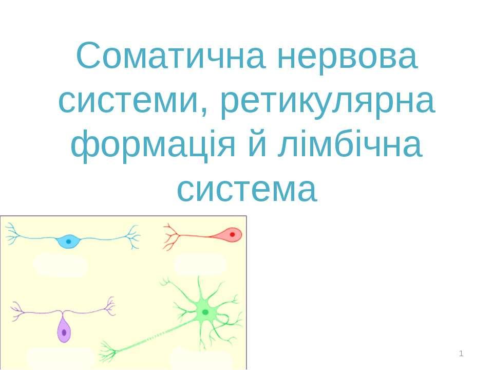 Соматична нервова системи, ретикулярна формація й лімбічна система *