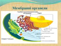 Мембранні органели