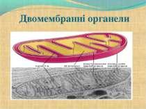 Двомембранні органели