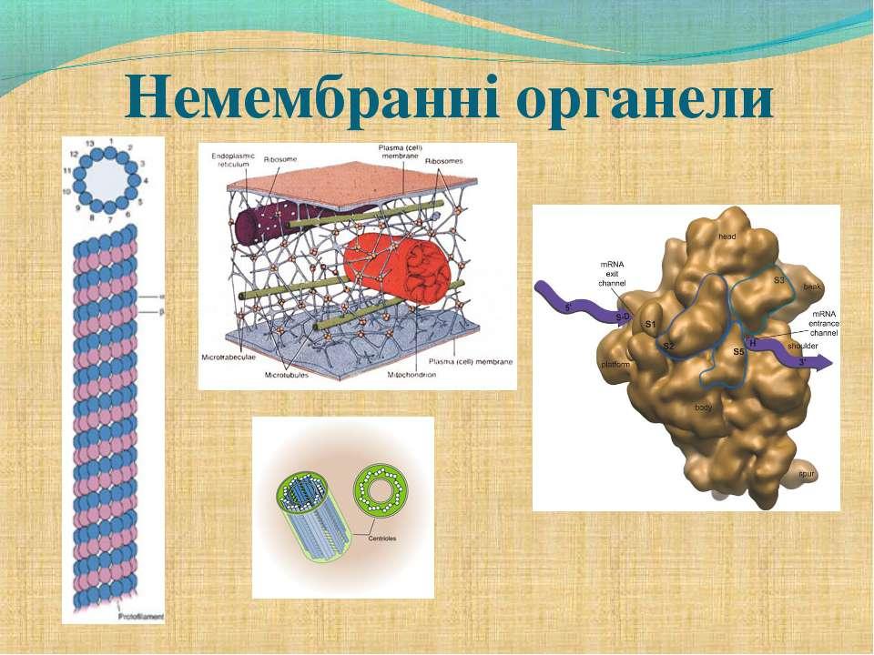 Немембранні органели